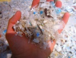 plastic remnants in the sea water
