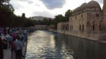 The fish lake at the mosque in Urfa